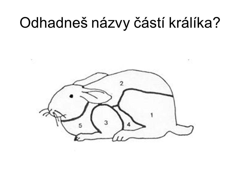 Odhadneš názvy částí králíka?