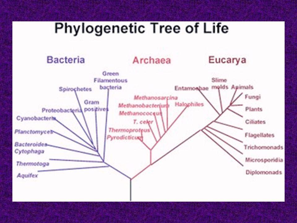 Dělení kategorií 1.Základní - zařazen každý taxon - např. rod (genus), řád (ordo), kmen (phylum), říše (regnum) aj. 2.Doplňkové - názvy odvozeny od zá