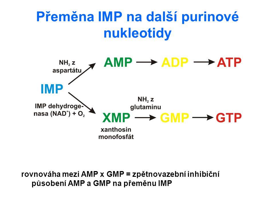Přeměna IMP na další purinové nukleotidy rovnováha mezi AMP x GMP = zpětnovazební inhibiční působení AMP a GMP na přeměnu IMP