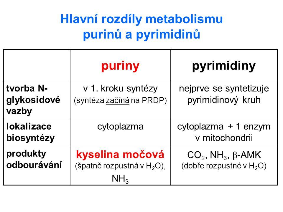 Hlavní rozdíly metabolismu purinů a pyrimidinů purinypyrimidiny tvorba N- glykosidové vazby v 1. kroku syntézy (syntéza začíná na PRDP) nejprve se syn