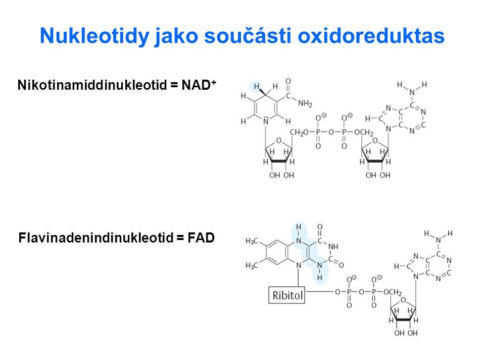 Nukleotidy jako součásti oxidoreduktas Nikotinamiddinukleotid = NAD + Flavinadenindinukleotid = FAD