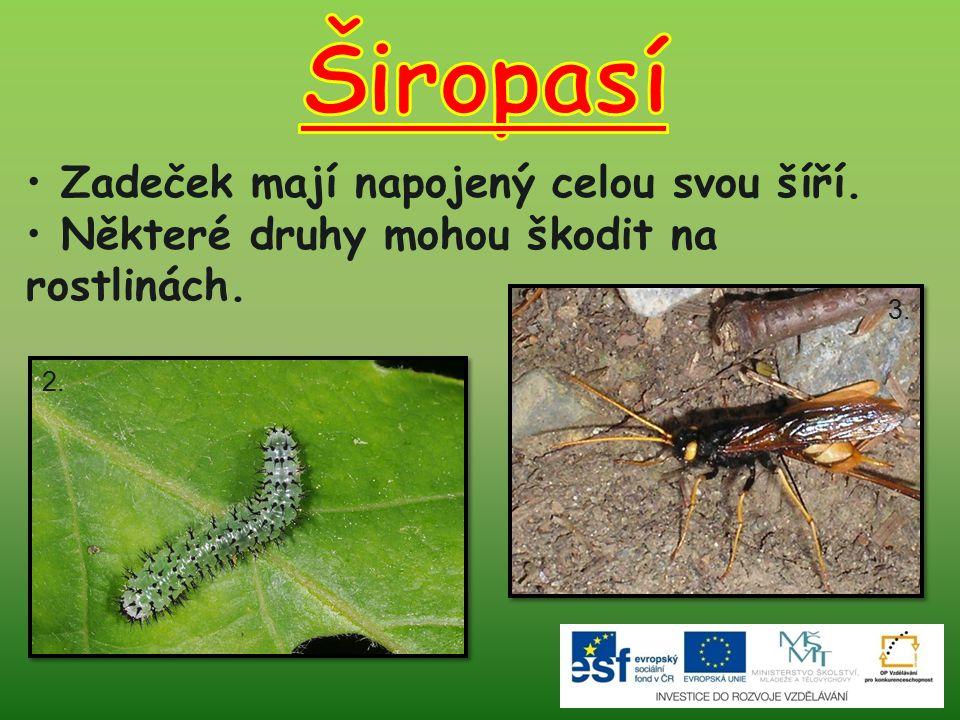Zadeček mají napojený celou svou šíří. Některé druhy mohou škodit na rostlinách. 2. 3.
