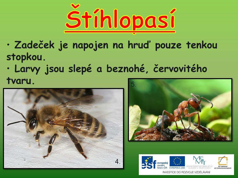 Velmi užitečný hmyz – opyluje květy, produkuje med a včelí vosk.