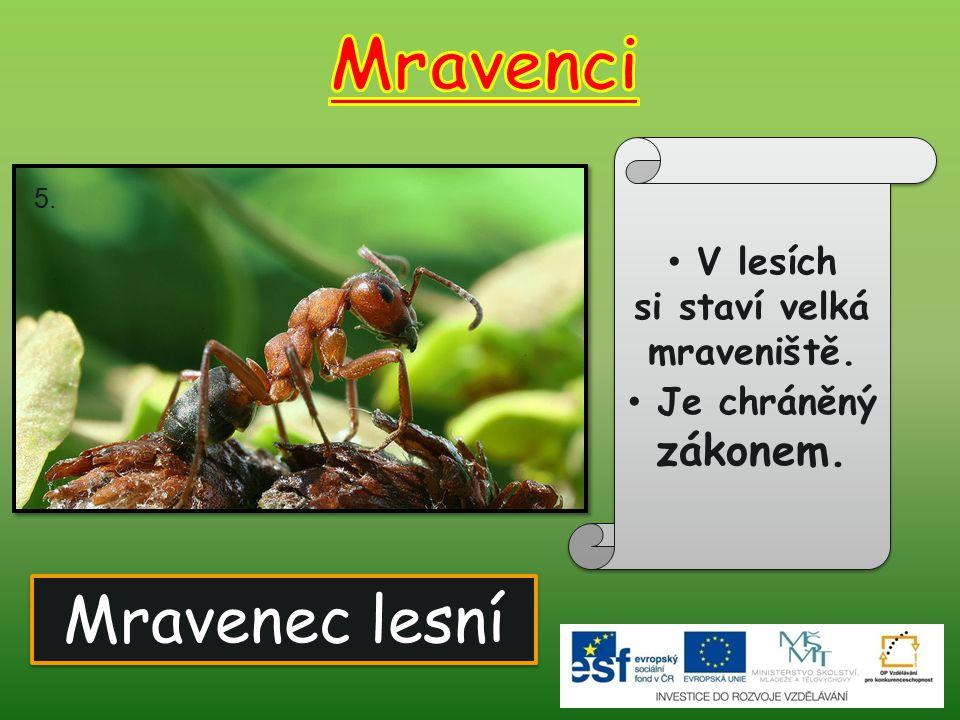 Mravenec lesní V lesích si staví velká mraveniště. Je chráněný zákonem. 5.