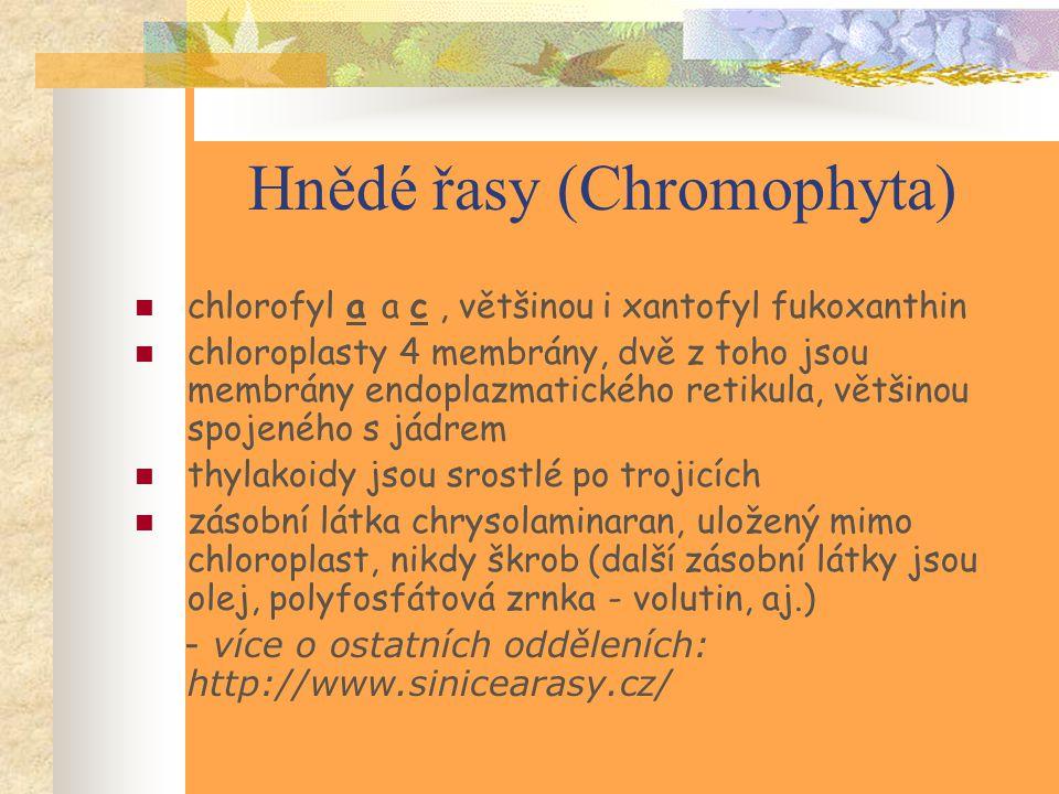 Hnědé řasy (Chromophyta) chlorofyl a a c, většinou i xantofyl fukoxanthin chloroplasty 4 membrány, dvě z toho jsou membrány endoplazmatického retikula, většinou spojeného s jádrem thylakoidy jsou srostlé po trojicích zásobní látka chrysolaminaran, uložený mimo chloroplast, nikdy škrob (další zásobní látky jsou olej, polyfosfátová zrnka - volutin, aj.) - více o ostatních odděleních: http://www.sinicearasy.cz/