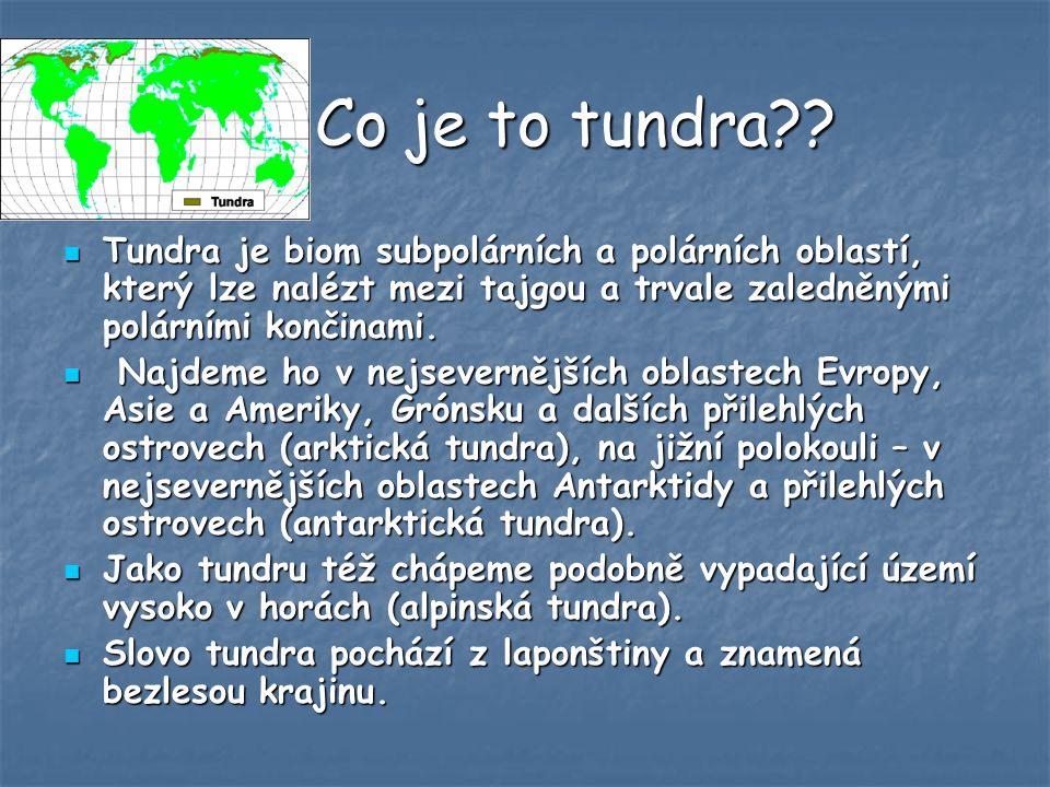 Co je to tundra?.Co je to tundra?.