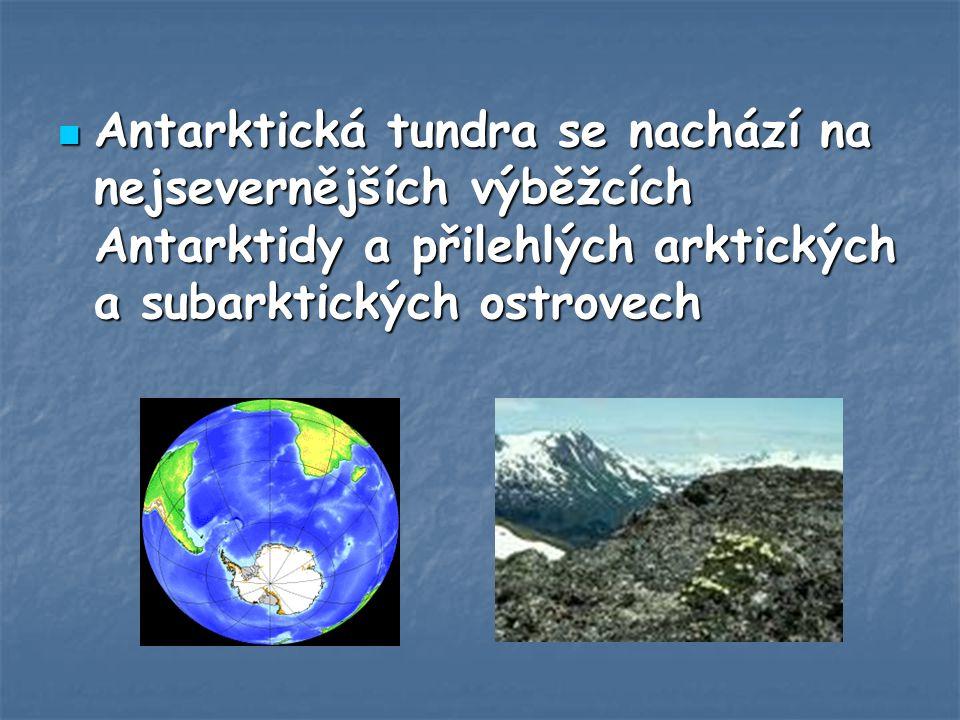 Antarktická tundra se nachází na nejsevernějších výběžcích Antarktidy a přilehlých arktických a subarktických ostrovech Antarktická tundra se nachází na nejsevernějších výběžcích Antarktidy a přilehlých arktických a subarktických ostrovech