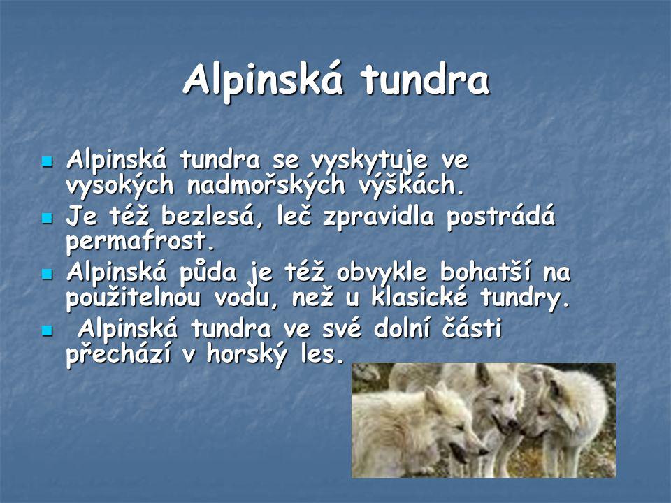 Alpinská tundra Alpinská tundra se vyskytuje ve vysokých nadmořských výškách.