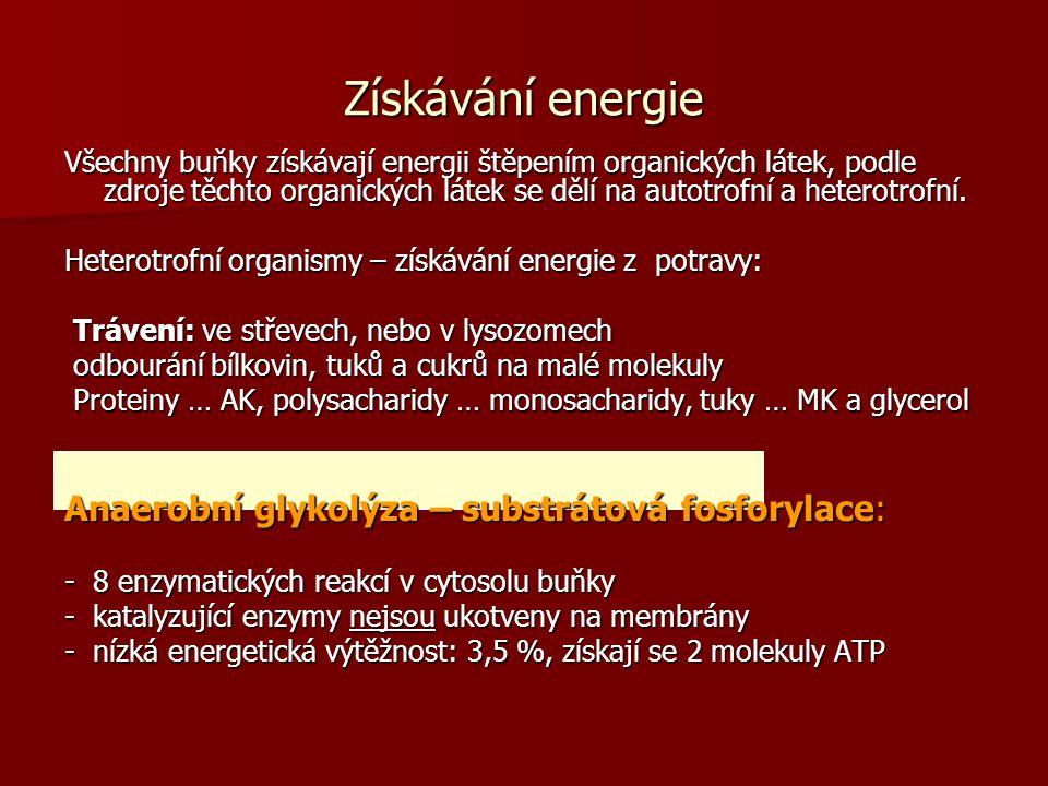 Získávání energie Všechny buňky získávají energii štěpením organických látek, podle zdroje těchto organických látek se dělí na autotrofní a heterotrof