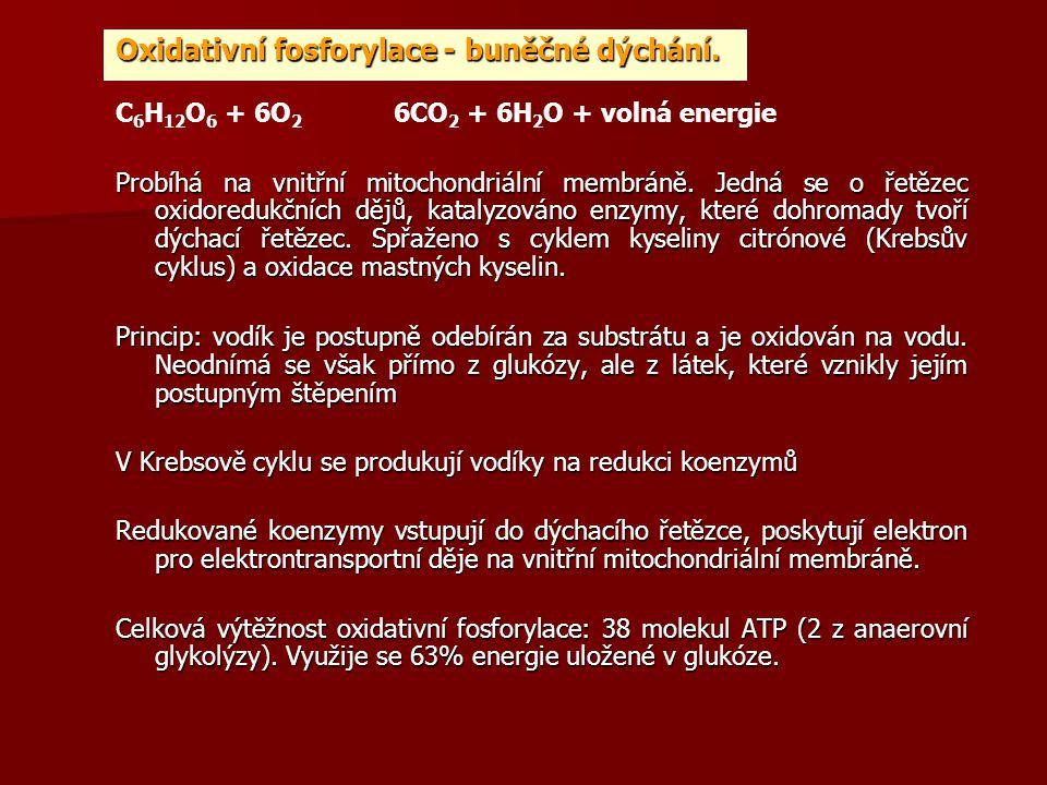 Oxidativní fosforylace - buněčné dýchání. C 6 H 12 O 6 + 6O 2 6CO 2 + 6H 2 O + volná energie Probíhá na vnitřní mitochondriální membráně. Jedná se o ř