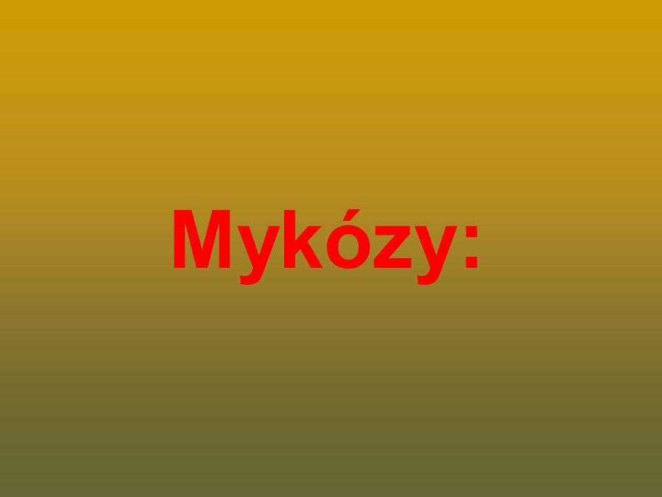 Mykózy: