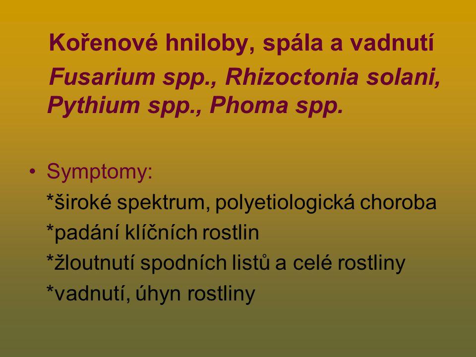 Kořenové hniloby, spála a vadnutí Fusarium spp., Rhizoctonia solani, Pythium spp., Phoma spp.