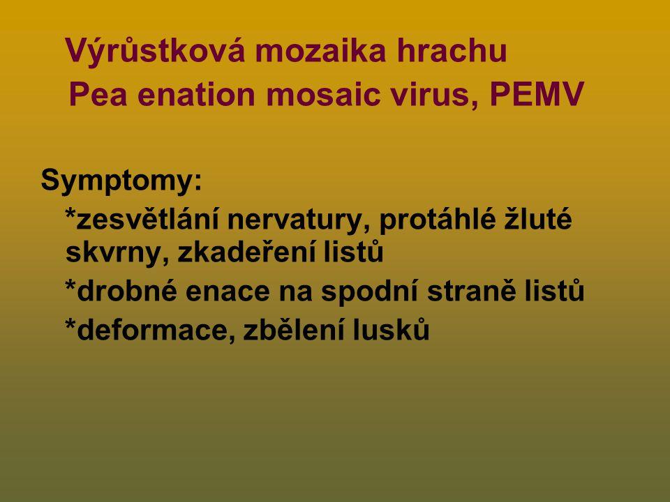 Výrůstková mozaika hrachu Pea enation mosaic virus, PEMV Symptomy: *zesvětlání nervatury, protáhlé žluté skvrny, zkadeření listů *drobné enace na spodní straně listů *deformace, zbělení lusků