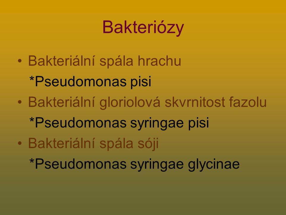 Bakteriózy Bakteriální spála hrachu *Pseudomonas pisi Bakteriální gloriolová skvrnitost fazolu *Pseudomonas syringae pisi Bakteriální spála sóji *Pseudomonas syringae glycinae