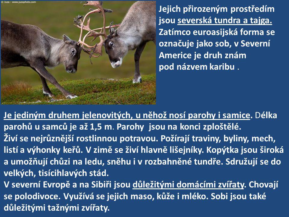 Jejich přirozeným prostředím jsou severská tundra a tajga. Zatímco euroasijská forma se označuje jako sob, v Severní Americe je druh znám pod názvem k