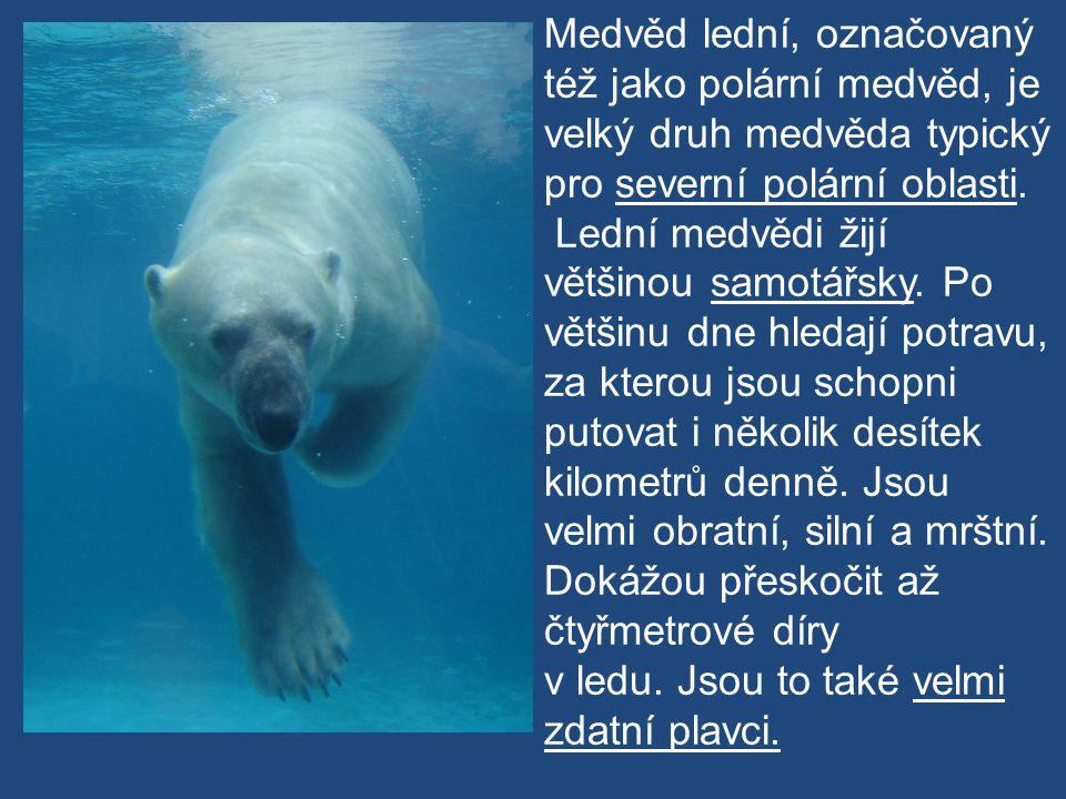 Medvěd lední, označovaný též jako polární medvěd, je velký druh medvěda typický pro severní polární oblasti. Lední medvědi žijí většinou samotářsky. P