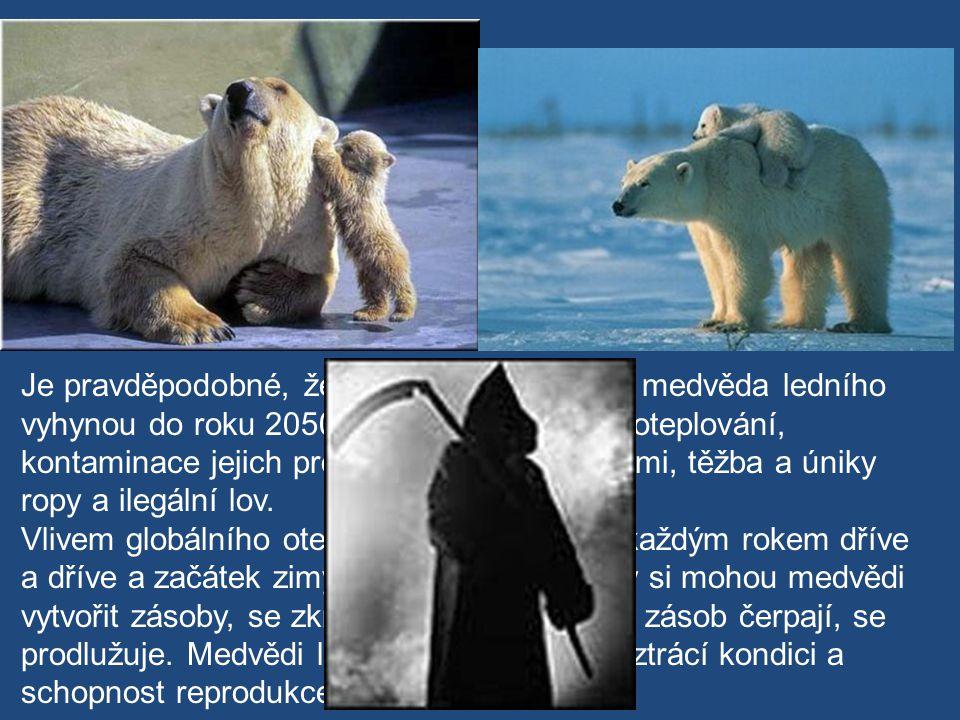 Je pravděpodobné, že dvě třetiny populace medvěda ledního vyhynou do roku 2050. Dostihlo je globální oteplování, kontaminace jejich prostředí toxickým