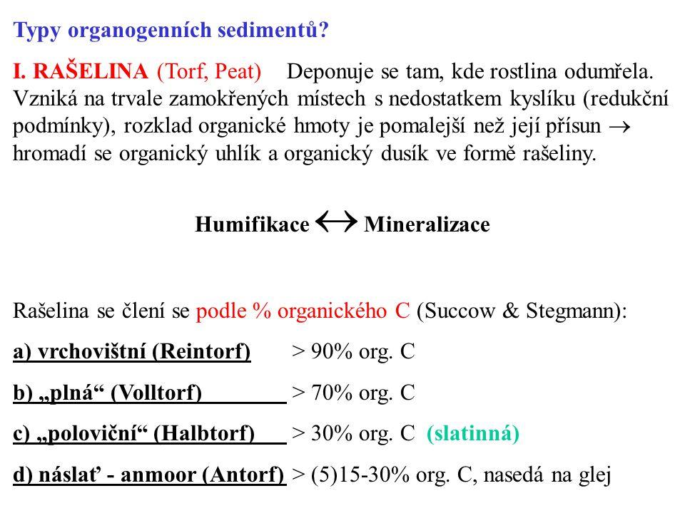 Typy organogenních sedimentů.I. RAŠELINA (Torf, Peat) Deponuje se tam, kde rostlina odumřela.