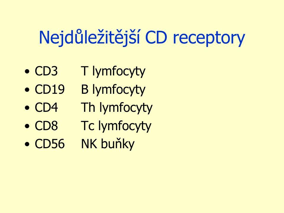 Nejdůležitější CD receptory CD3T lymfocyty CD19B lymfocyty CD4Th lymfocyty CD8Tc lymfocyty CD56NK buňky