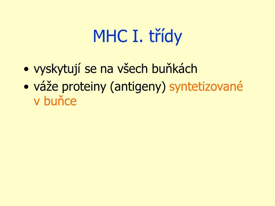 MHC I. třídy vyskytují se na všech buňkách váže proteiny (antigeny) syntetizované v buňce