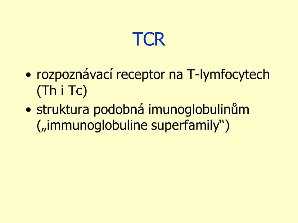"""TCR rozpoznávací receptor na T-lymfocytech (Th i Tc) struktura podobná imunoglobulinům (""""immunoglobuline superfamily )"""