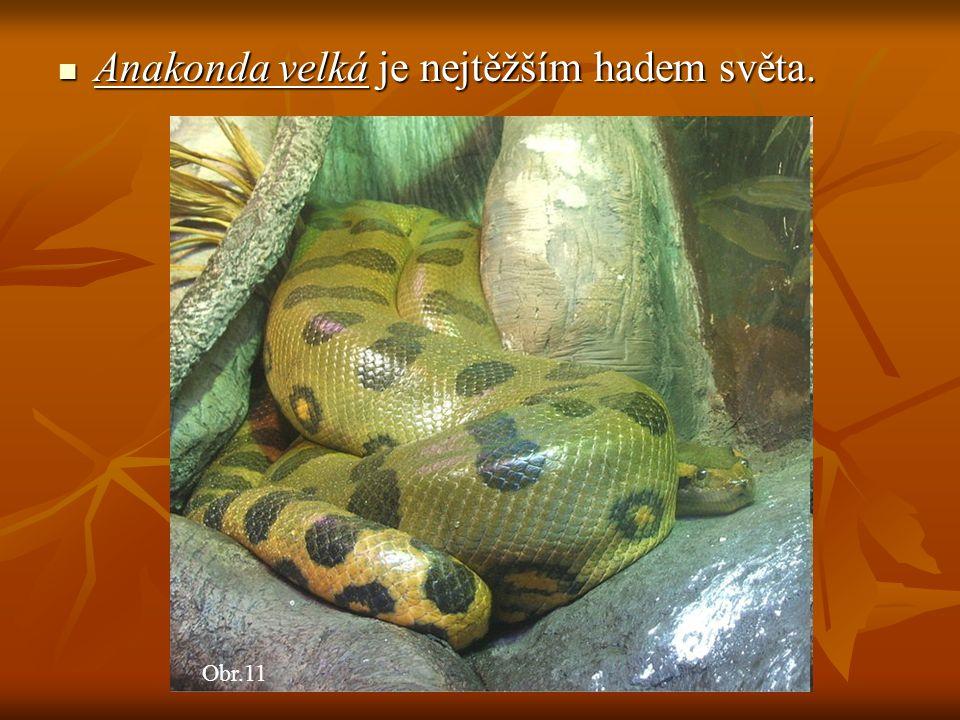Anakonda velká je nejtěžším hadem světa. Anakonda velká je nejtěžším hadem světa. Obr.11