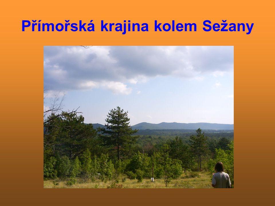 Borové hospodářství Borovice černá patří mezi nejrozšířenější dřeviny přímořské oblasti.Zdá se býti nejvitálnější dřevinou,poněvadž jsou zde časté požáry.Borovice černá dokáže přečkat požár, má silnou borku.