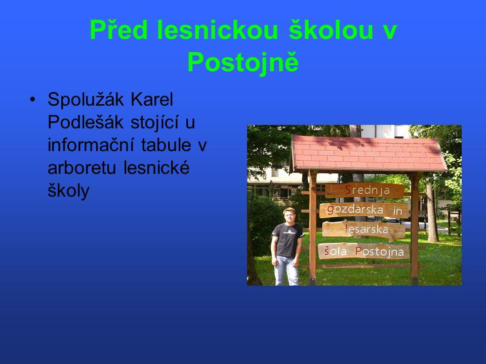 Nejstarší stromy ve Slovinsku Nejstarší lípa Slovinska před Predjamským Gradem