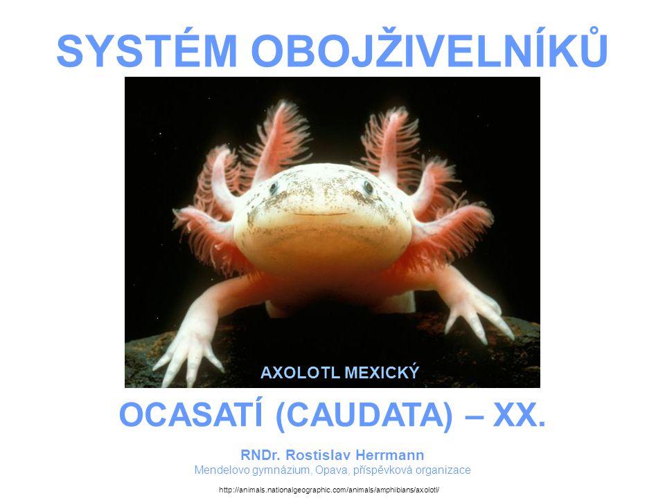 SYSTÉM OBOJŽIVELNÍKŮ – OCASATÍ (CAUDATA) – XX.AXOLOTLOVITÍ Robustní, převážně vodní obojživelníci.
