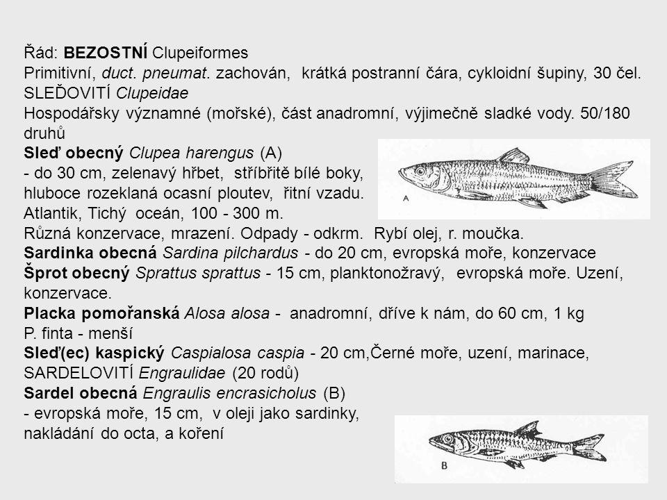 Řád: BEZOSTNÍ Clupeiformes Primitivní, duct. pneumat. zachován, krátká postranní čára, cykloidní šupiny, 30 čel. SLEĎOVITÍ Clupeidae Hospodářsky význa
