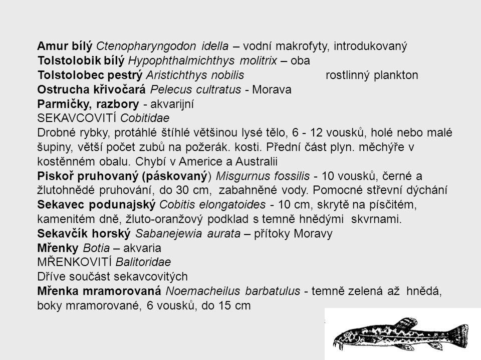 Amur bílý Ctenopharyngodon idella – vodní makrofyty, introdukovaný Tolstolobik bílý Hypophthalmichthys molitrix – oba Tolstolobec pestrý Aristichthys