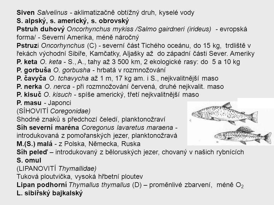 Siven Salvelinus - aklimatizačně obtížný druh, kyselé vody S. alpský, s. americký, s. obrovský Pstruh duhový Oncorhynchus mykiss /Salmo gairdneri (iri