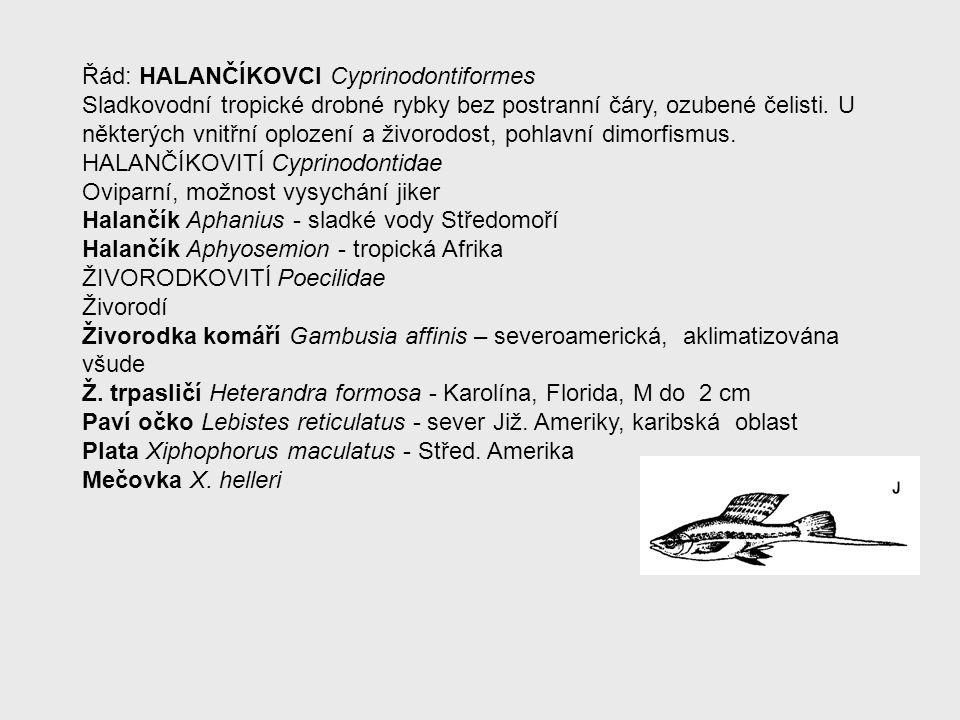 Řád: HALANČÍKOVCI Cyprinodontiformes Sladkovodní tropické drobné rybky bez postranní čáry, ozubené čelisti. U některých vnitřní oplození a živorodost,