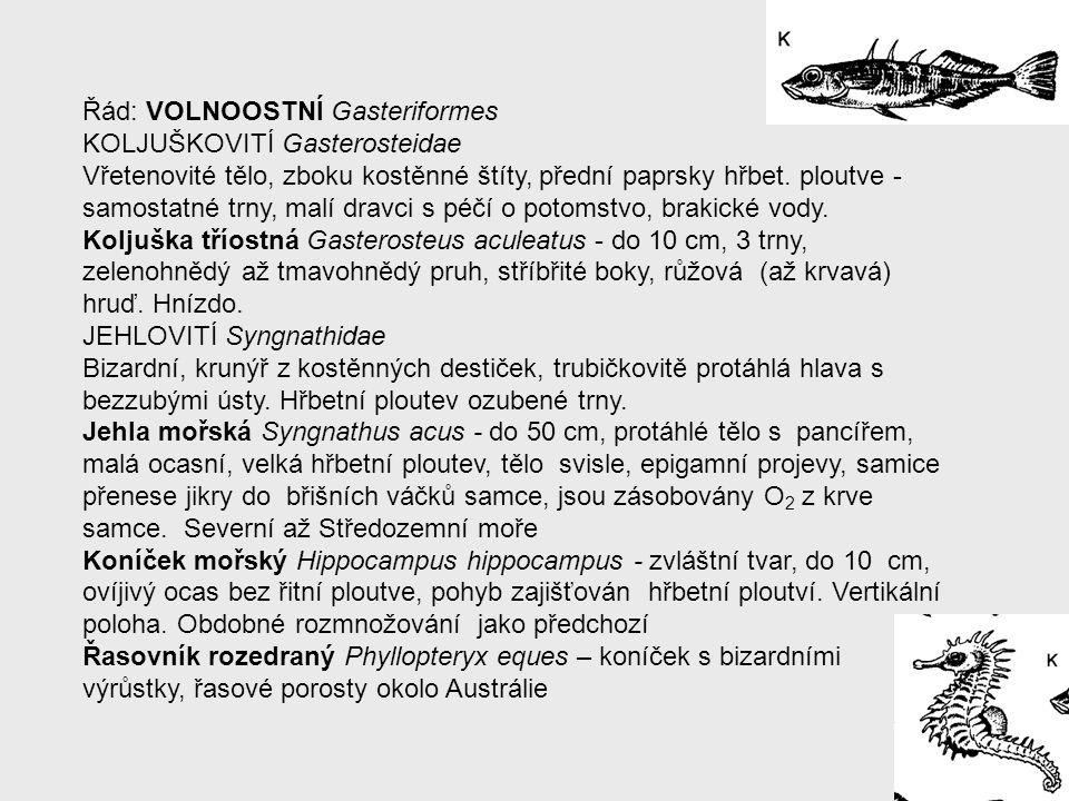 Řád: VOLNOOSTNÍ Gasteriformes KOLJUŠKOVITÍ Gasterosteidae Vřetenovité tělo, zboku kostěnné štíty, přední paprsky hřbet. ploutve - samostatné trny, mal