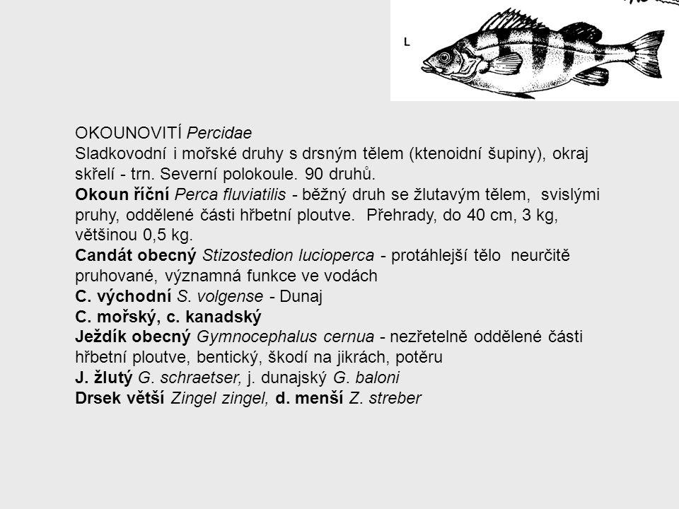 OKOUNOVITÍ Percidae Sladkovodní i mořské druhy s drsným tělem (ktenoidní šupiny), okraj skřelí - trn. Severní polokoule. 90 druhů. Okoun říční Perca f