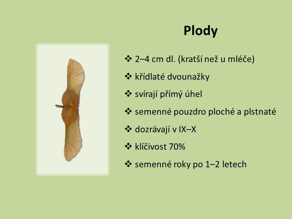Plody  2–4 cm dl. (kratší než u mléče)  křídlaté dvounažky  svírají přímý úhel  semenné pouzdro ploché a plstnaté  dozrávají v IX–X  klíčivost 7