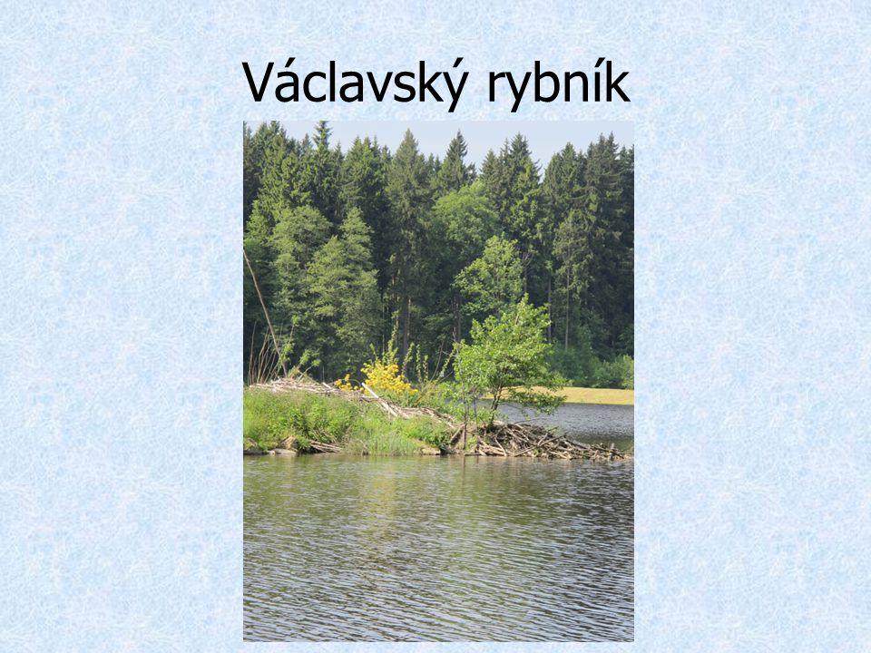 Václavský rybník
