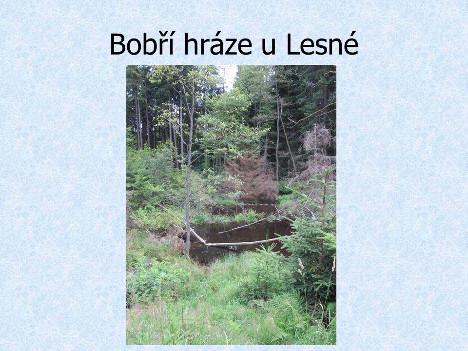 Bobří hráze u Lesné