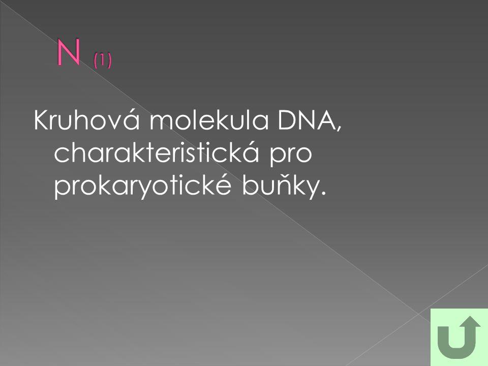 Kruhová molekula DNA, charakteristická pro prokaryotické buňky.