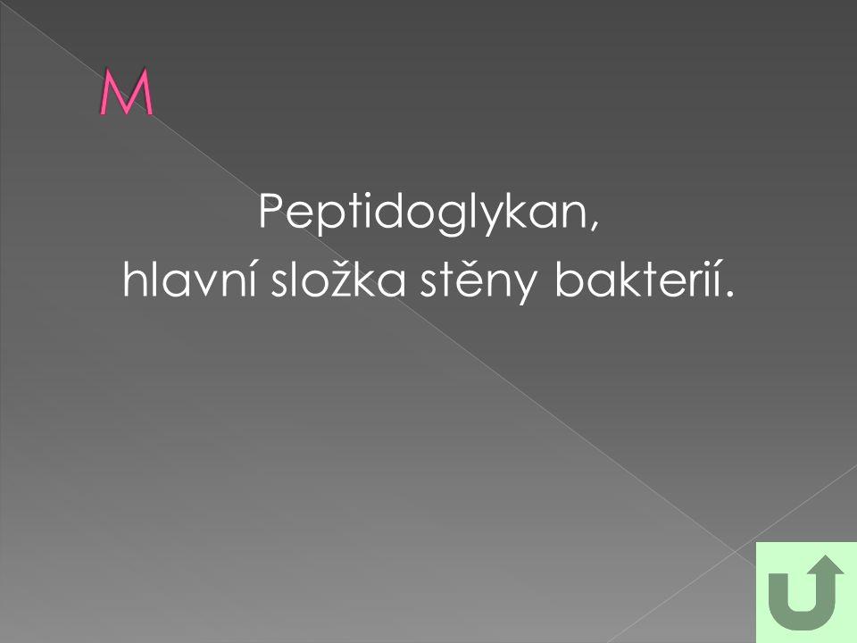 Peptidoglykan, hlavní složka stěny bakterií.