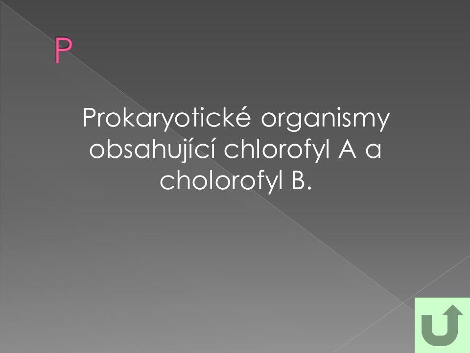 Prokaryotické organismy obsahující chlorofyl A a cholorofyl B.