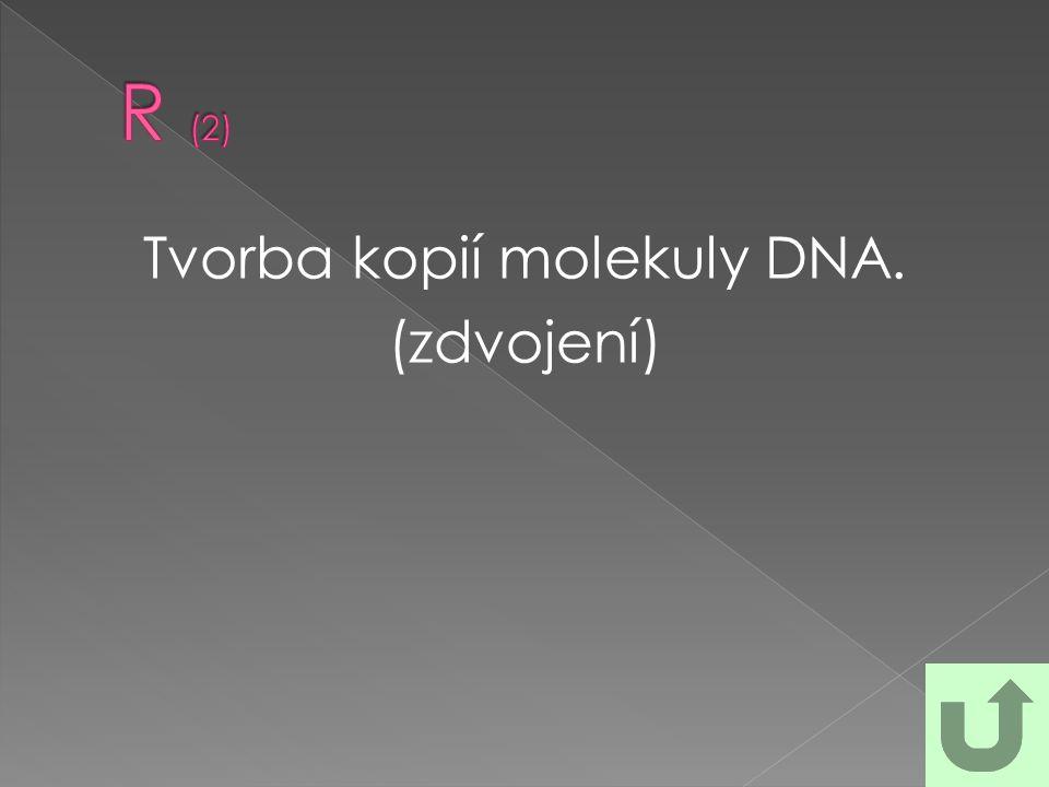 Tvorba kopií molekuly DNA. (zdvojení)
