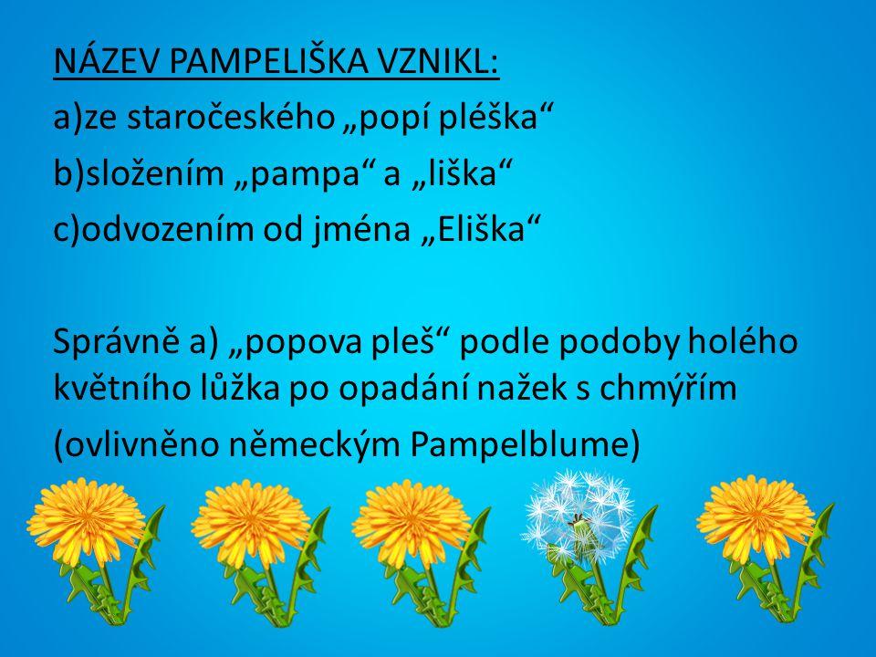 """NÁZEV PAMPELIŠKA VZNIKL: a)ze staročeského """"popí pléška b)složením """"pampa a """"liška c)odvozením od jména """"Eliška Správně a) """"popova pleš podle podoby holého květního lůžka po opadání nažek s chmýřím (ovlivněno německým Pampelblume)"""