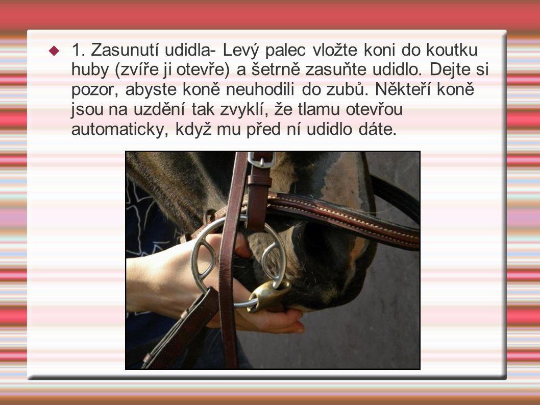  1. Zasunutí udidla- Levý palec vložte koni do koutku huby (zvíře ji otevře) a šetrně zasuňte udidlo. Dejte si pozor, abyste koně neuhodili do zubů.