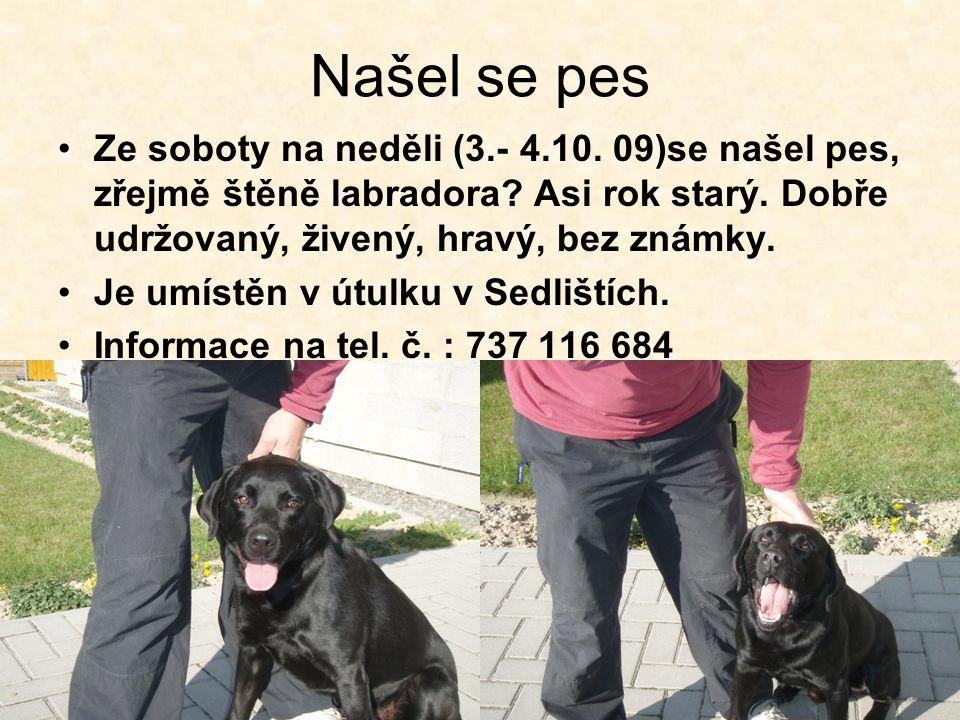 Našel se pes Ze soboty na neděli (3.- 4.10. 09)se našel pes, zřejmě štěně labradora? Asi rok starý. Dobře udržovaný, živený, hravý, bez známky. Je umí