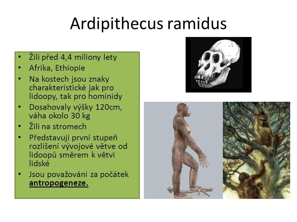 rod Australopithecus objevitel- prof.
