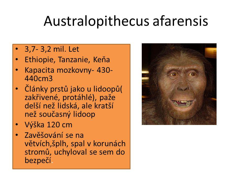 h.s. neandert.