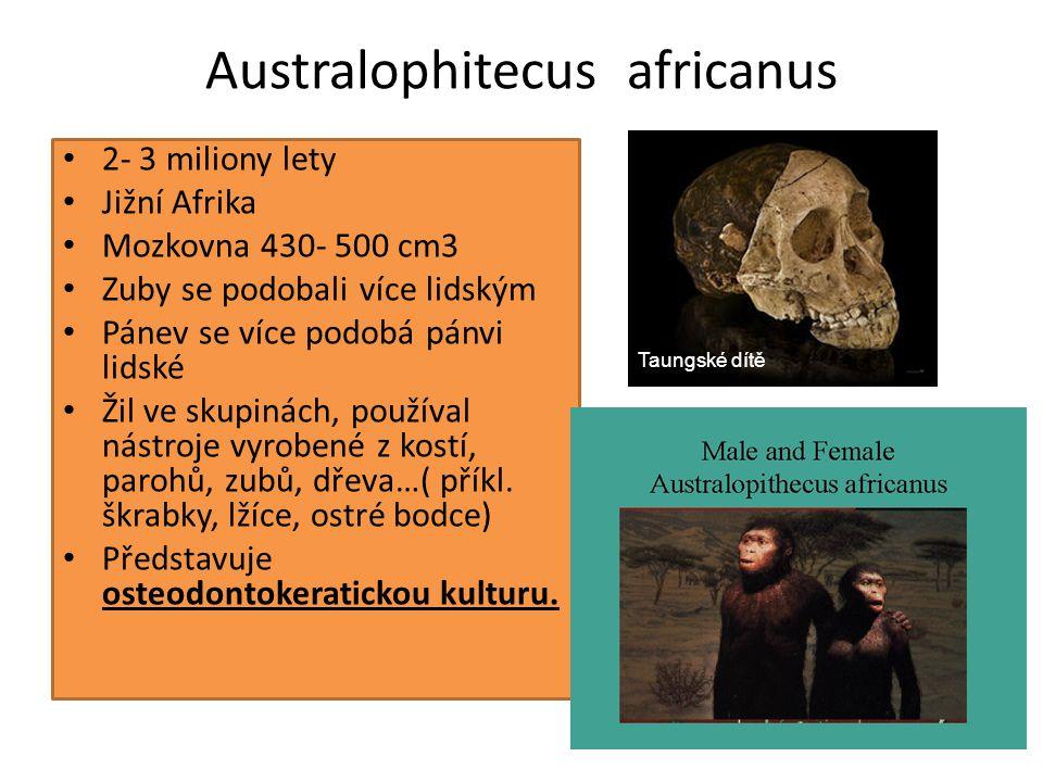 Člověk zručný(= homo habilis) Objeven prof.Louisem S.