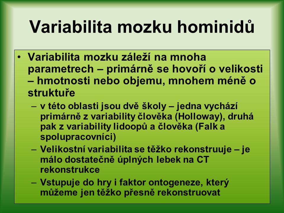 Variabilita tělesné hmotnosti homininů Jsou velmi patrné rozdíly ve variabilitě mezi rodem Homo a ranných homininů Jsou způsobeny mnohem menší četnost