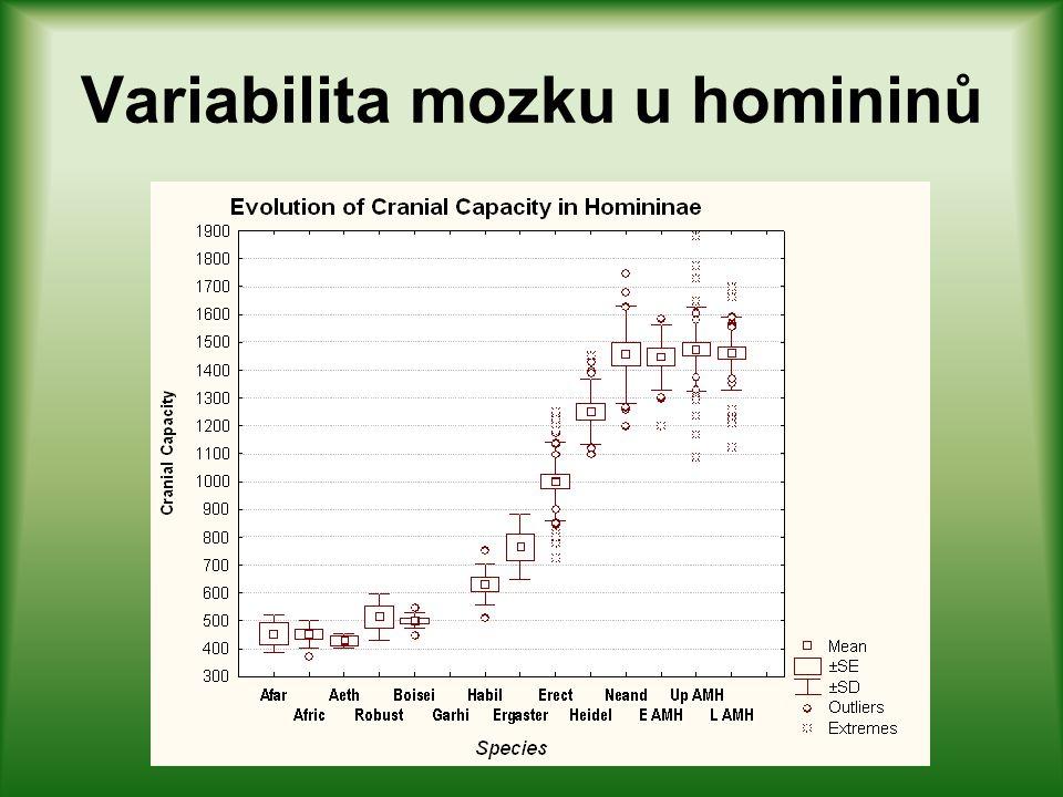 Variabilita mozku hominidů Variabilita mozku záleží na mnoha parametrech – primárně se hovoří o velikosti – hmotnosti nebo objemu, mnohem méně o struk